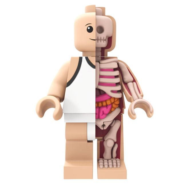 bigger-micro-anatomic-blog-1