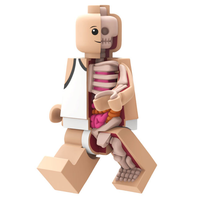 bigger-micro-anatomic-blog-2