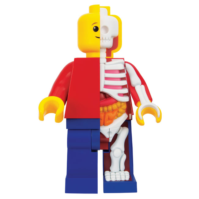 mighty-jaxx-jason-freeny-bigger-micro-anatomic-junior-1