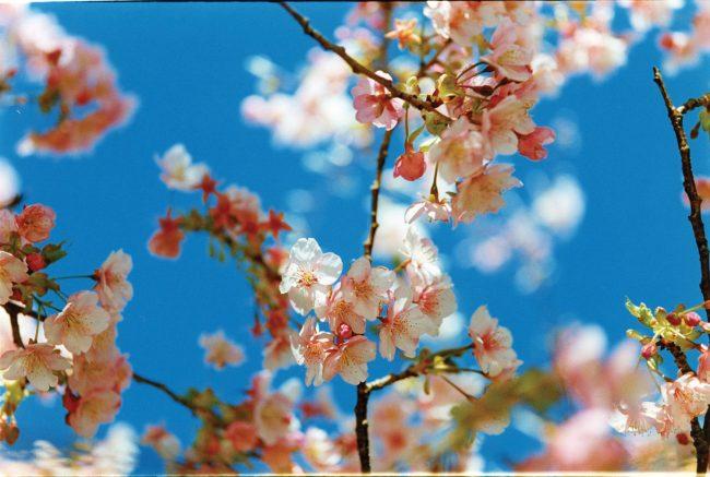Mika_Ninagawa_AB15.jpg.1500x1500_q85_replace_alpha-white